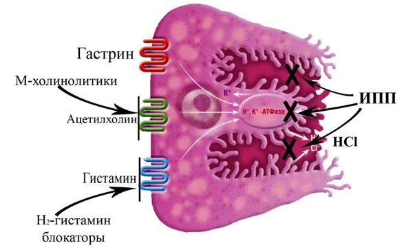 Протонный насос