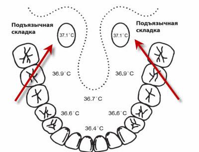 оральное измерение t