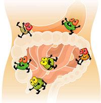 микрофлора кишечника