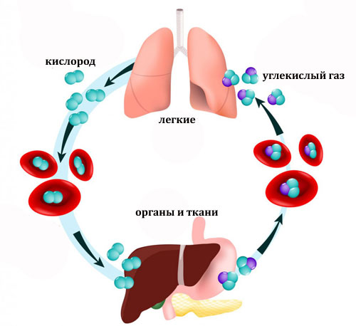 обмен кислорода